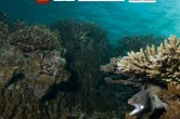 Affiche-colloque-Isotope-Corail-4-sup