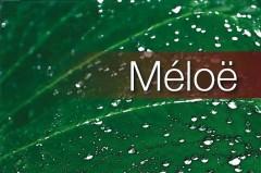 meloe-web